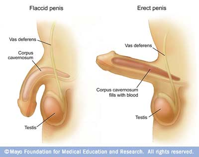 Diseases reference index « Erection problems »