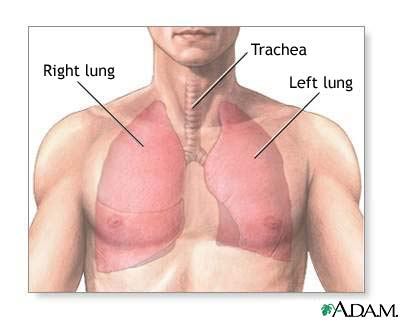 Lung disease resources causes symptoms treatment lung disease lung disease resources ccuart Choice Image