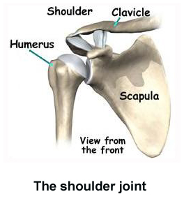 ball-and-socket joint. causes, symptoms, treatment ball-and-socket, Human Body