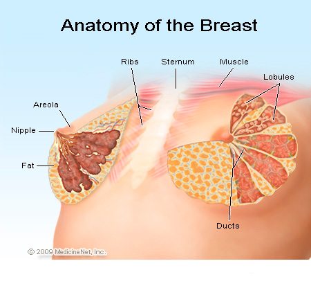 breast cysts creams