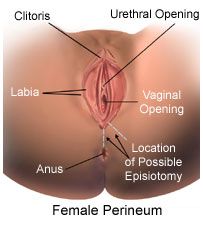 Female Urethral Meatus Causes Symptoms Treatment Female