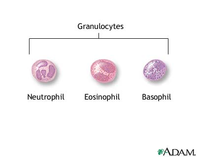 Granulocyte Causes Symptoms Treatment Granulocyte