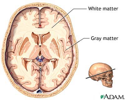 Definition of «Gray matter»