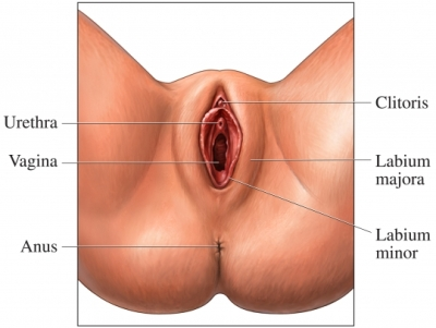 Definition of « Labia, vaginal »