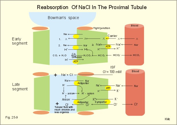 Reabsorption Causes Symptoms Treatment Reabsorption