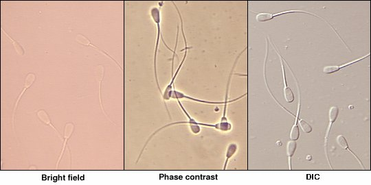 Due time Canine sperm viability not clear